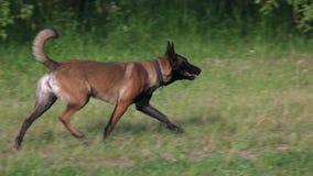 Pies zakłada przegraną rzecz zbiory