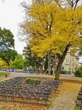 Piestany,斯洛伐克秋天天在空的城市公园观众席 免版税库存图片