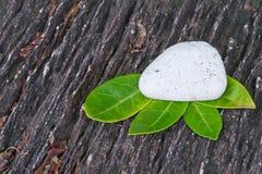 Pietra bianca con il foglio verde Fotografie Stock Libere da Diritti