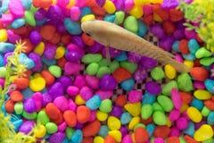 Pietra Colourful dell'ornamento e un fondo del pesce Immagini Stock
