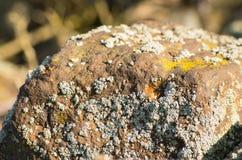 Pietra con il lichene grigio Fotografia Stock Libera da Diritti