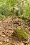 Pietra con muschio sulle tracce della foresta Immagini Stock