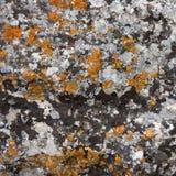 pietra coperta dai muschi Immagini Stock Libere da Diritti