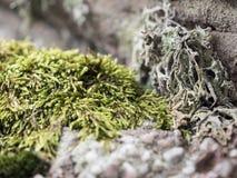 Pietra coperta di muschio in un fondo vago immagine stock