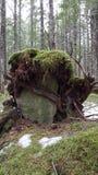 Pietra della tomba del terreno boscoso immagine stock