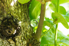 Pietra di cristallo in all'aperto verde Immagini Stock