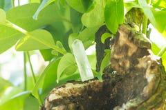 Pietra di cristallo in all'aperto verde Immagine Stock