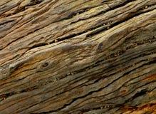 Pietra di legno petrificata Fotografia Stock