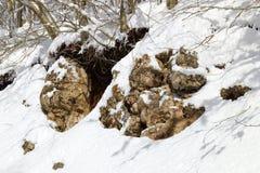 Pietra di Snowy Fotografia Stock