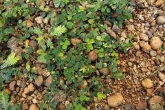 Pietra di Texure e fondo dell'erba fotografie stock