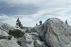 Pietra ed alberi in Yellowstone fotografia stock