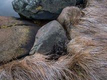 Pietra ed erba congelate alla riva della spiaggia fotografie stock