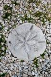 Pietra facente un passo del dollaro di sabbia Fotografia Stock