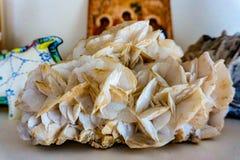 Pietra minerale ad angolo bianca di Aura Quartz fotografia stock libera da diritti