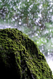 Pietra muscosa con i precedenti della cascata Fotografia Stock