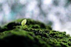 Pietra muscosa e giovane pianta verde con i precedenti della cascata Fotografia Stock Libera da Diritti