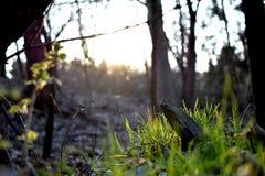 Pietra nella foresta Fotografia Stock Libera da Diritti