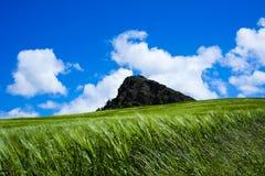 Pietra Parcellara with wheat field in Val Trebbia, Piacenza, Ita Royalty Free Stock Photos