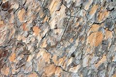 Pietra-pino, priorità bassa Fotografia Stock Libera da Diritti