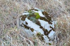 Pietra selvaggia del fondo con il muschio sull'erba di autunno immagini stock
