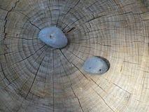 Pietra su un tronco Fotografie Stock Libere da Diritti
