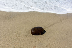 Pietra sulla sabbia alla spiaggia pacifica Immagine Stock