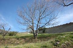 Pietrasanta, πόλη της τέχνης και ομορφιά της υψηλής Τοσκάνης στην Ιταλία ένας άφθονος κήπος και οι τοίχοι του φρουρίου του μεσαιω στοκ εικόνα