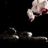 Pietre bagnate della stazione termale con il bello fiore fresco Fotografia Stock