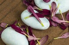 Pietre bianche con i petali di Gerber porpora fotografia stock