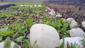 Pietre bianche sull'erba fotografie stock