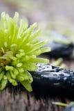 Pietre con le gocce dell'acqua Fotografie Stock