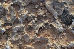 Pietre corrosive con argilla e le piante costiere Fotografia Stock Libera da Diritti