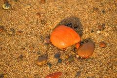 Pietre dei ciottoli su una spiaggia Immagine Stock Libera da Diritti