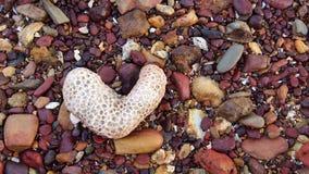 Pietre del corallo del cuore Immagine Stock