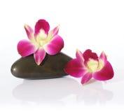 Pietre del fiume e dell'orchidea Fotografie Stock Libere da Diritti