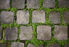 Pietre della pavimentazione con erba fotografie stock
