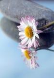 Pietre della stazione termale e fiore bianco Fotografie Stock