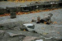 Pietre delle rovine Fotografia Stock