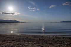 Pietre di lancio in Stuart Lake calmo, St James forte, BC fotografie stock libere da diritti