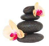 Pietre di massaggio con aloe vera Immagini Stock Libere da Diritti