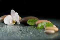 Pietre di zen con il fiore dell'orchidea sul nero Immagini Stock