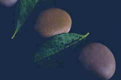 Pietre di zen sul nero con le gocce di acqua Fotografie Stock