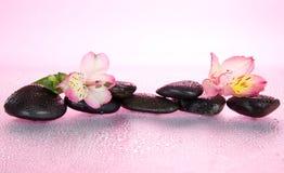 Pietre e fiore di alstroemeria nelle gocce di acqua Fotografia Stock