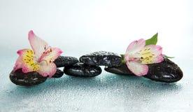 Pietre e fiore di alstroemeria nelle gocce di acqua Immagini Stock
