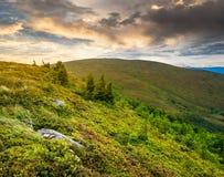 Pietre ed alberi della conifera sul pendio di collina ad alba Fotografie Stock