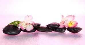 Pietre ed il fiore di alstroemeria in acqua Immagini Stock Libere da Diritti