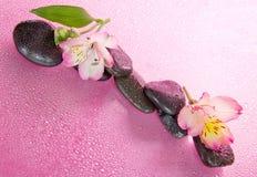 Pietre ed il fiore nelle gocce di acqua Immagine Stock Libera da Diritti