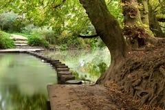 Pietre facenti un passo del terreno boscoso Fotografia Stock