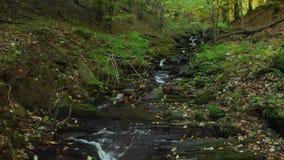 Pietre muscose verdi e bagnate lungo la corrente del fiume della montagna archivi video