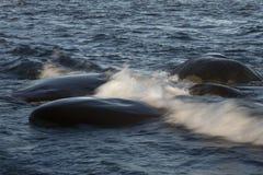 Pietre nel mare Immagini Stock